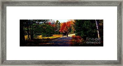 Acadia National Park Carriage Trail Fall  Framed Print