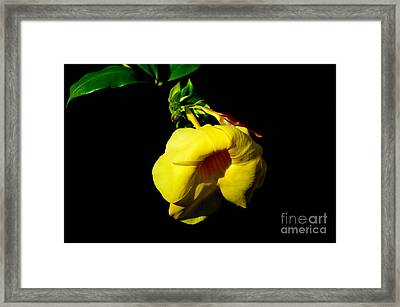 All Yellow Framed Print by Michelle Meenawong