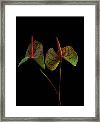 Anthurium 1 Framed Print