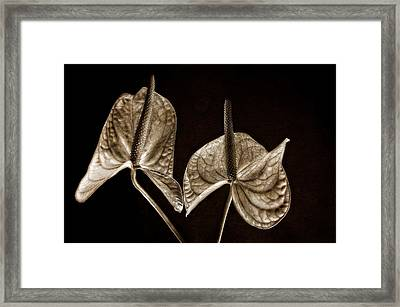 Anthurium 2 Framed Print