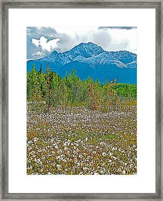Arctic Cotton Along Cassiar Highway-british Columbia Framed Print by Ruth Hager