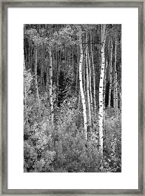 Framed Print featuring the photograph  Aspen Autumn  by Eric Rundle