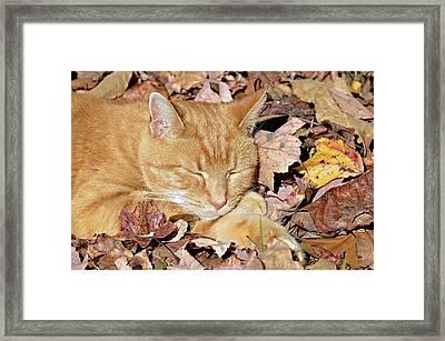 Autumn Dreaming Framed Print by Susan Leggett
