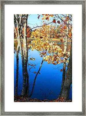 Autumn Trees On The Lake Framed Print