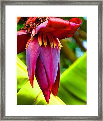 Banana Flower Glow Framed Print by Margaret Saheed