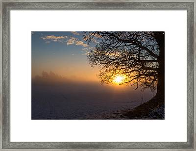 Sunbeams Pour Through The Tree At The Misty Winter Sunrise Framed Print
