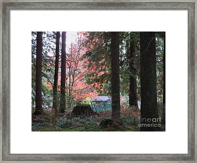 Beauty Through The Trees Framed Print