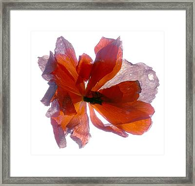 Begonia Round Framed Print by Julia McLemore