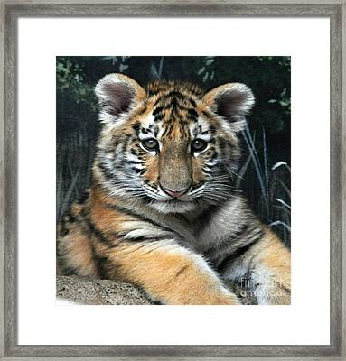 Bengal Tiger Cub Im The Baby Framed Print