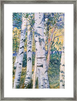 Birch Trees Framed Print by Carl Larsson
