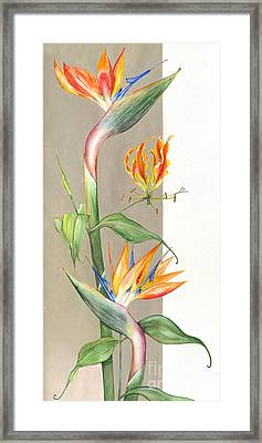 Bird Of Paradise 09 Elena Yakubovich Framed Print by Elena Yakubovich