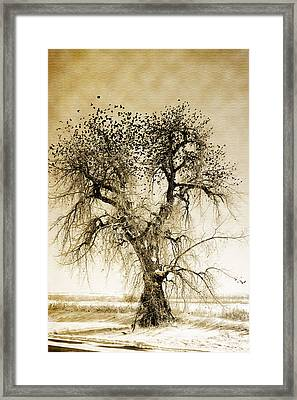 Bird Tree Fine Art  Mono Tone And Textured Framed Print