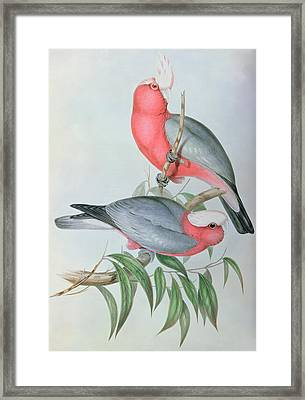 Birds Of Asia Framed Print