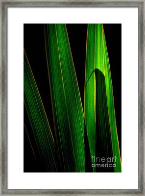 Black And Green Framed Print by Michelle Meenawong