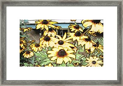 Black-eyed Susan Sketch Framed Print by Beverly Guilliams
