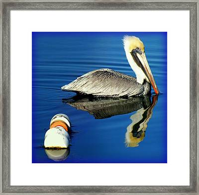 Blues Pelican Framed Print