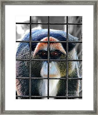 Brazza Inmate Framed Print by Alexey Dubrovin