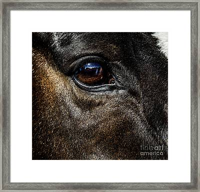 Bright Eyes - Horse Portrait Framed Print by Holly Martin