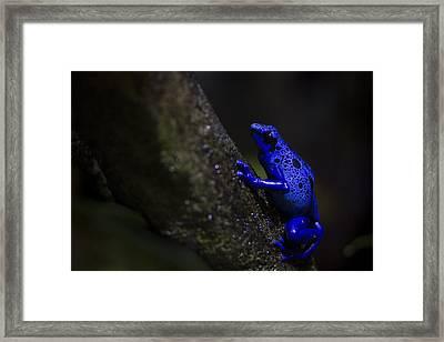 Brilliant Blue Framed Print