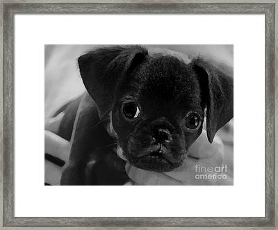 Brussel Griffon Puppy Painting Framed Print