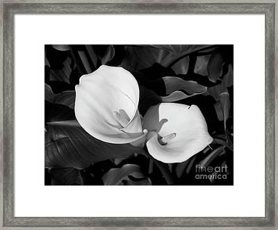 Calla Lilies Bw 1 Framed Print