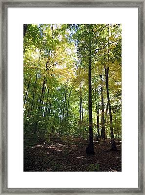 Canadian Wild Tall Trees Fall Season Nature Natural Beautiful Pleasing Scenes       Framed Print