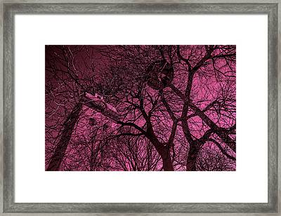 Church And Trees In Pinkish Framed Print