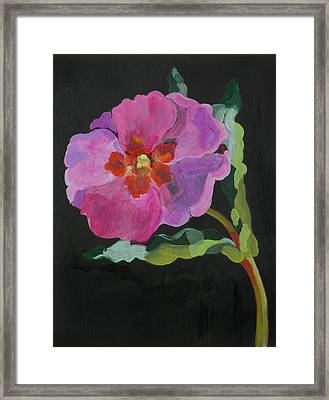 Cistus New Zealand Framed Print by Deborah Barton