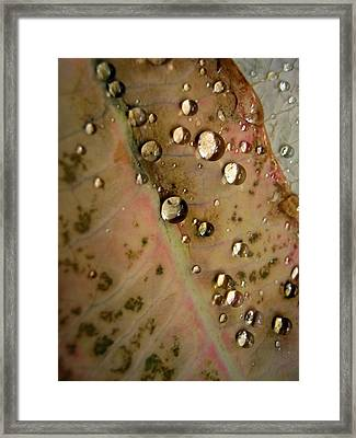 Clear Drops Framed Print by Michelle Meenawong