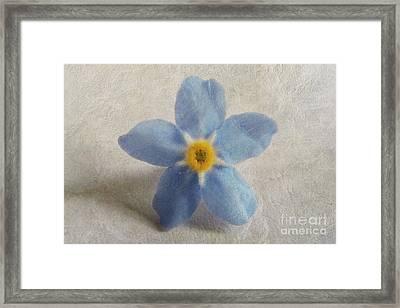 Myosotis 'forget-me-not'- Single Flower Framed Print