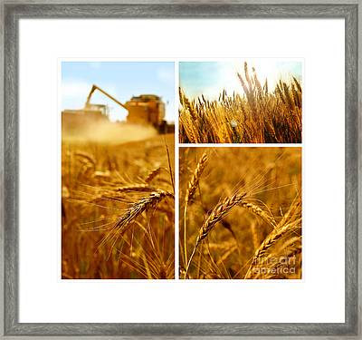 Collage Fields And Grain Framed Print by Boon Mee