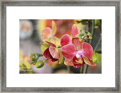 Colourful Orchids Framed Print