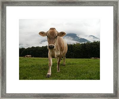 Cow In Switzerland Framed Print by Gynt