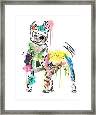 Cute Pit Bull Framed Print by Mark Ashkenazi