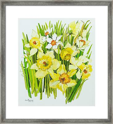 Daffodils And Narcissus Framed Print by Joan Thewsey