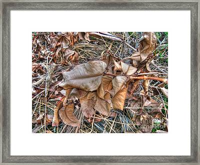 Dead Leaves Framed Print by Michelle Meenawong