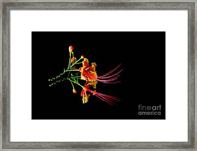 Framed Print featuring the photograph  Delicacy by Michelle Meenawong