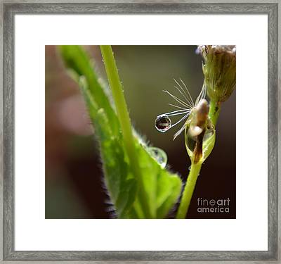 Dew Drop Framed Print by Michelle Meenawong