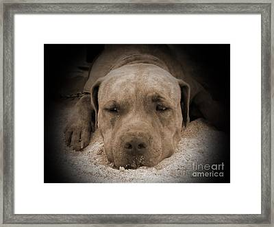 Don't Disturb Me Framed Print by Michelle Meenawong