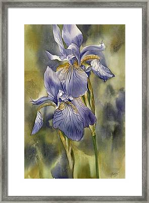 Double Blue Irises Framed Print by Alfred Ng
