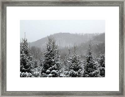 Driftless Pine  Framed Print by Dina  Stillwell