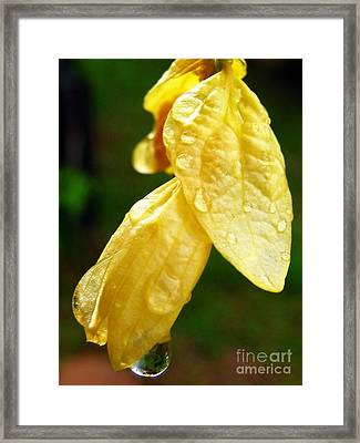 Drop On Yellow Flower Framed Print by Michelle Meenawong