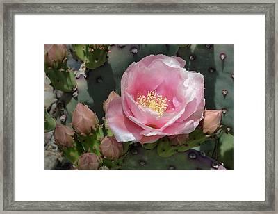 Durango Prickly Pear Framed Print by Cindy McDaniel