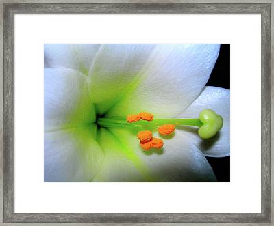 Framed Print featuring the photograph   Easter A New Beginning  by Randy Rosenberger