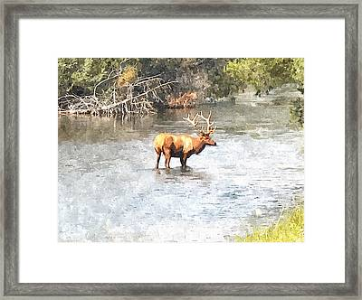Elk In The Water National Bison Range  Framed Print by Larry Stolle