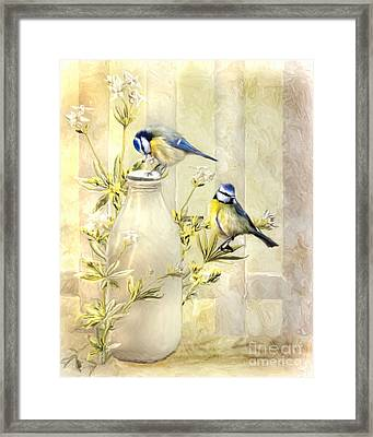 English Blue Tits Framed Print