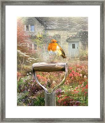 English Robin Framed Print