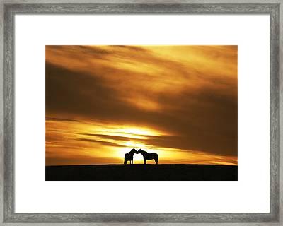 Equine Kiss Framed Print