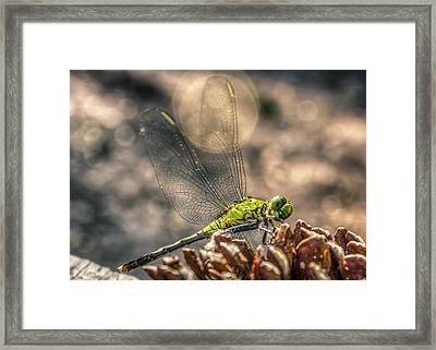 Framed Print featuring the photograph  Erythemis Simplicicollis by Rob Sellers