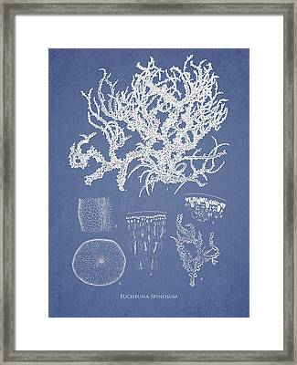 Eucheuma Spinosum Framed Print by Aged Pixel